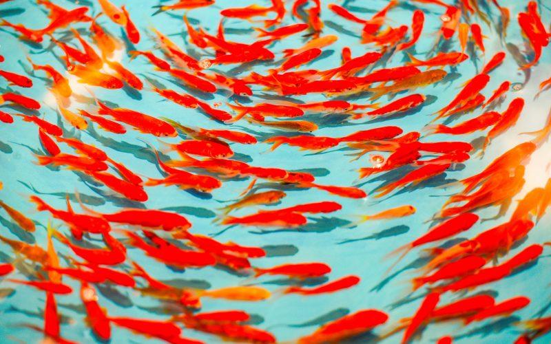 Oranje vissen_lesbische kinderwens_donor